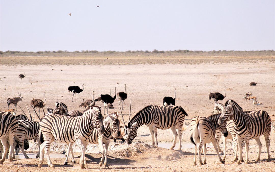 Carte d'identité : le parc national d'Etosha en Namibie