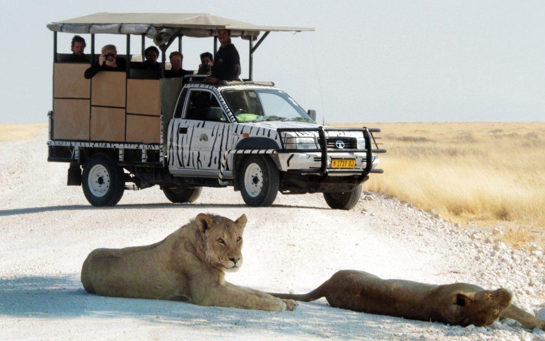 Un safari en Namibie : mode d'emploi