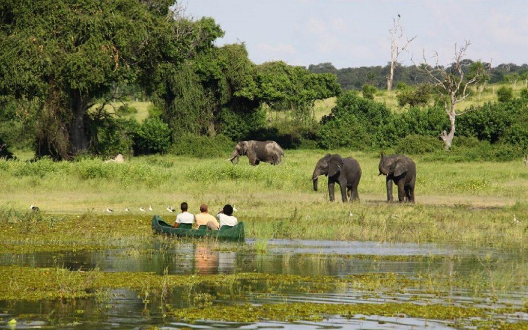 Un rendez-vous passionnel dans le nord de la Namibie – où se rencontrent le Chobe et le Zambèze