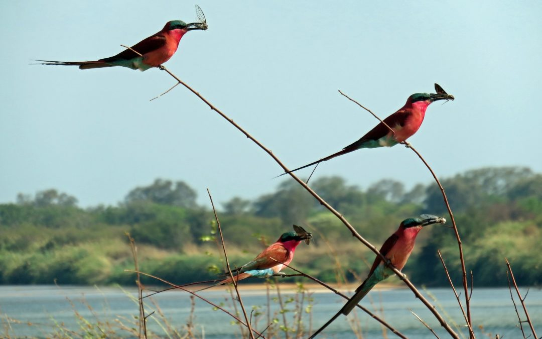 Que faire en Namibie au printemps ?