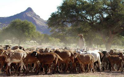 Les fermes et les fermiers en Namibie