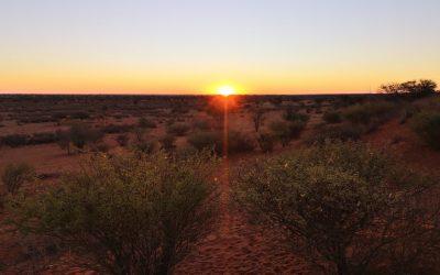 Voyager en Namibie : tombez amoureux du Kalahari
