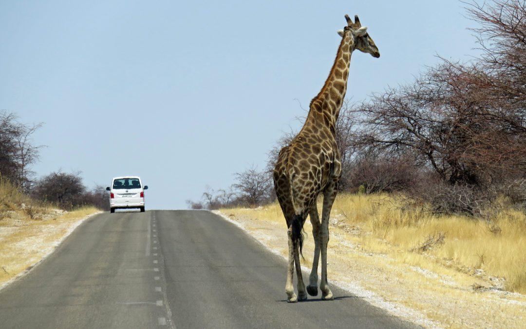Highlights Tour – Découvrez la Namibie en 10 jours avec Safari2Go