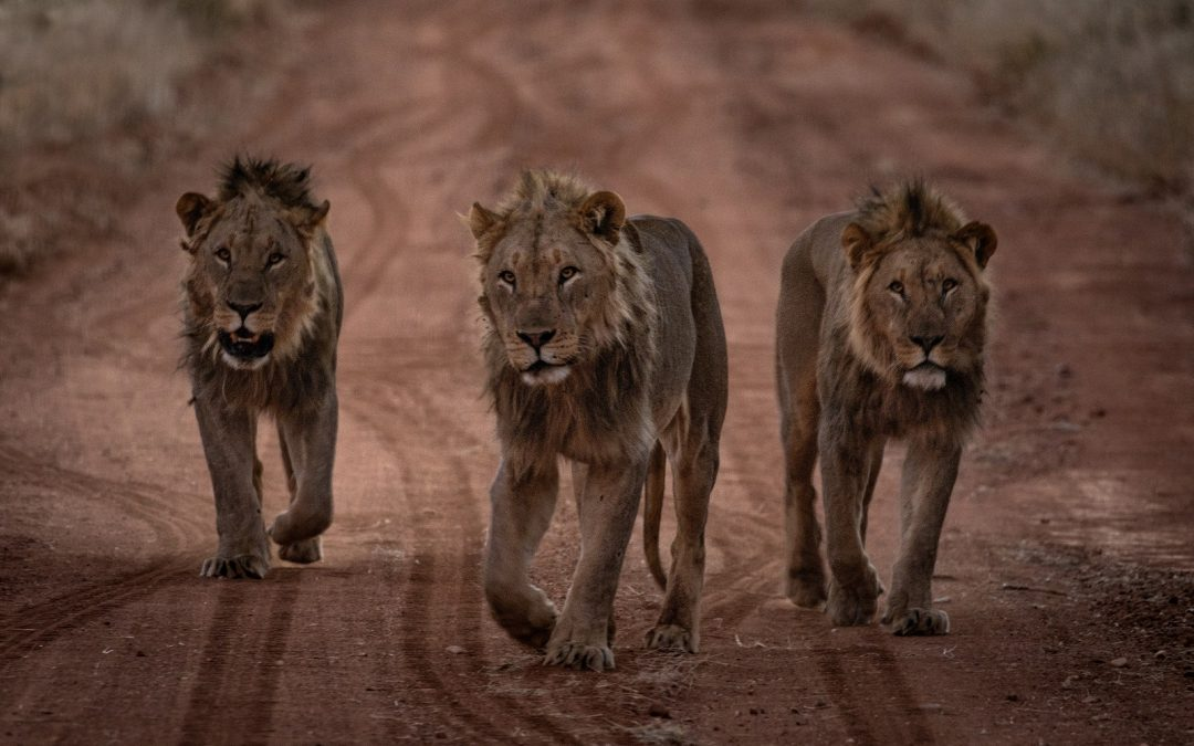 Safari en autotour en Namibie – Moringa
