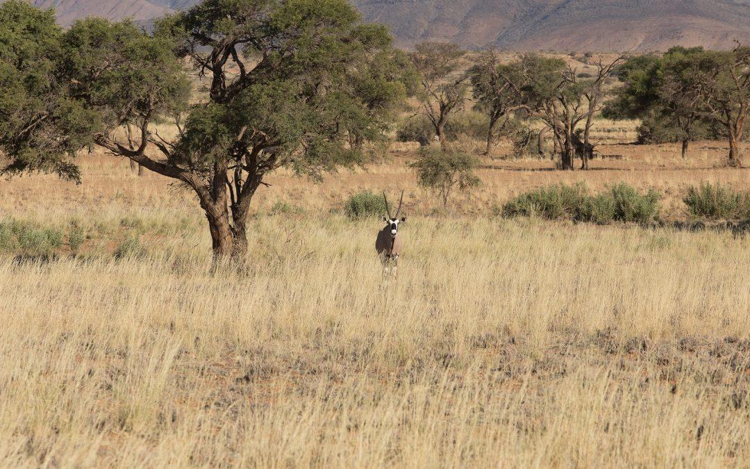 Hommage au père de la conservation intégrée en Namibie – Garth Owen-Smith