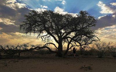 Safari en autotour en Namibie – Camelthorn