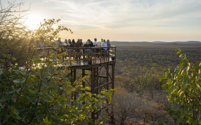 Etosha Collection en Namibie – rendez-vous au point d'eau