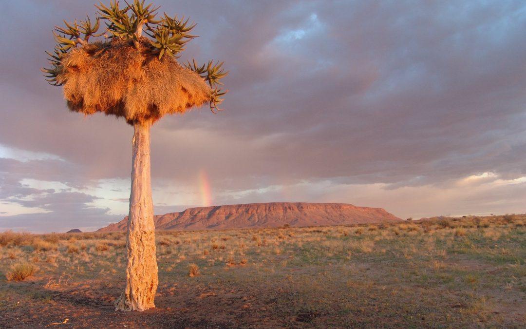 Un appartement en herbe en Namibie