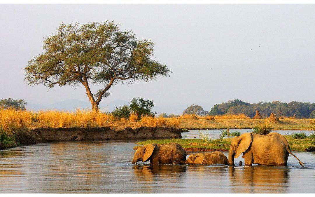 Vivez la vraie Afrique au parc national de Bwabwata en Namibie