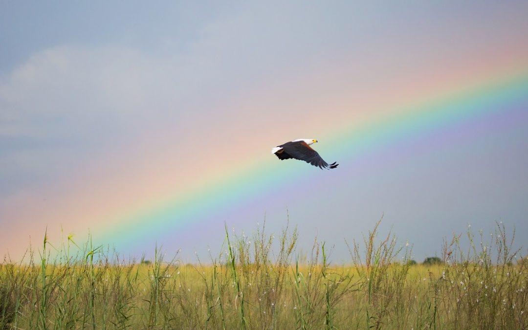 À la poursuite des arcs-en-ciel avec Gondwana Collection en Namibie