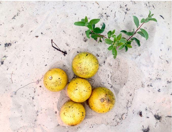 Connaissez-vous les oranges de singe de Namibie ?