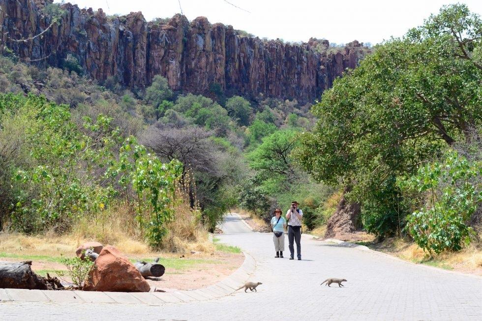 Pourquoi le parc national de Waterberg en Namibie est-il si extraordinaire ?