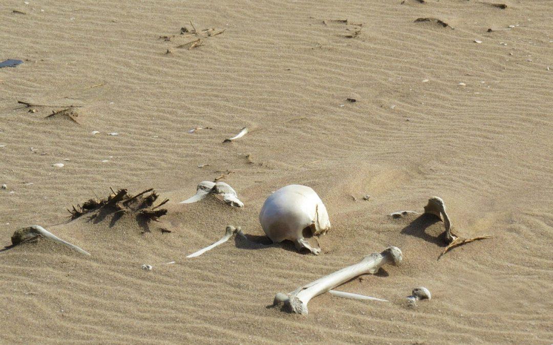 D'où le nom de la Côte des Squelettes en Namibie ?
